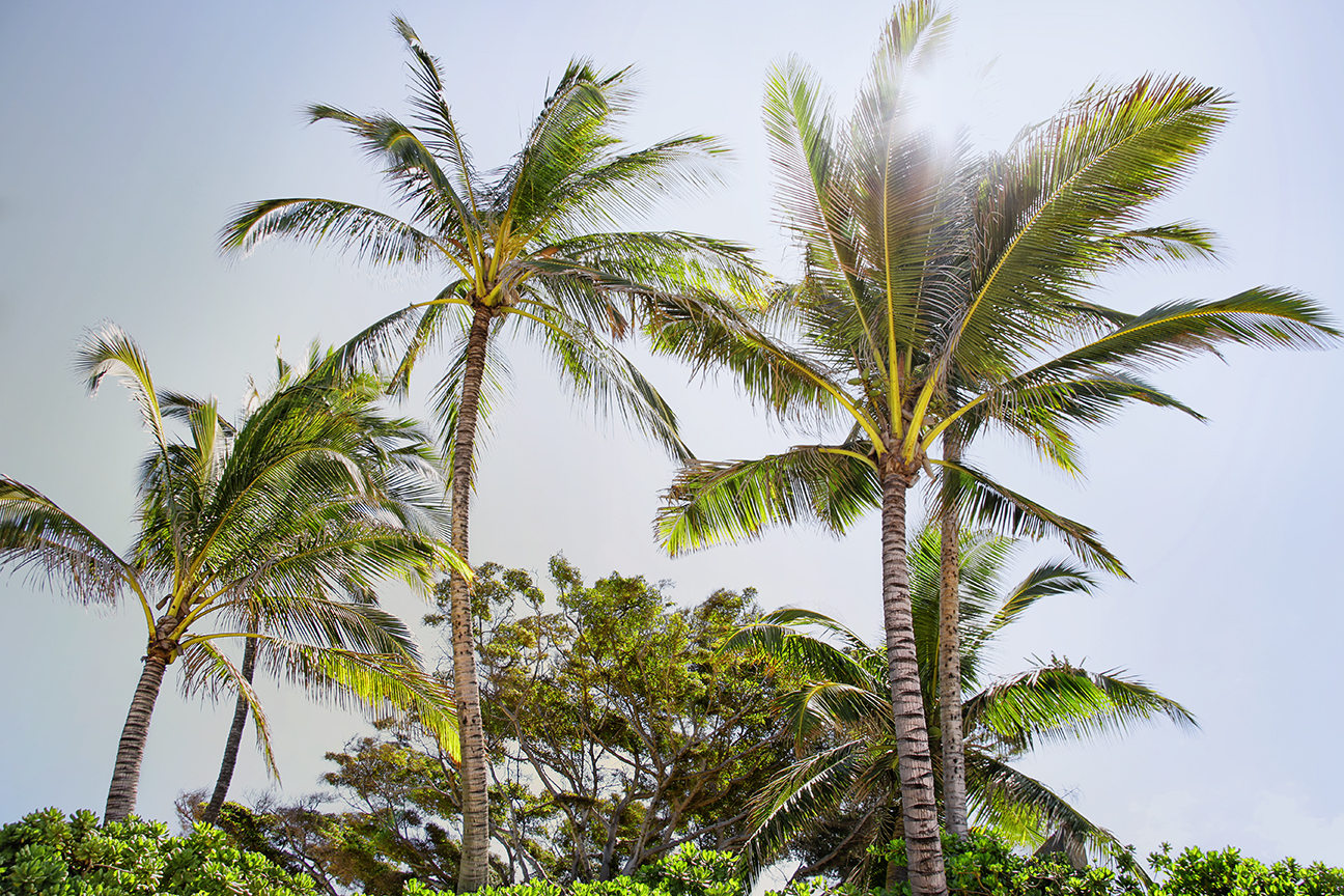 Samantha Fierro New York Photographer Palm Tree Paradise in Maui